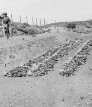 Remains of New Zealand soldiers awaiting burial in 1919. Source: Imperial War Museum